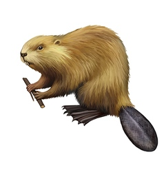 Beaver holding a tree branch vector image vector image