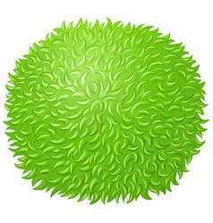 Green fluffy ball on white vector image