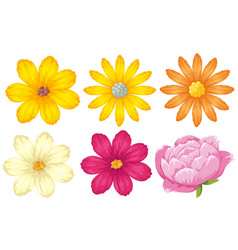 Different kinds of flowers in yellow and pink vector
