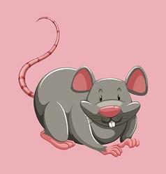 Gray rat on pink vector