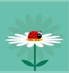 ladybug ladybird insect white daisy chamomile vector image