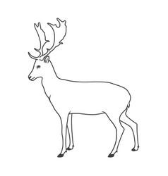 noble deer vector image