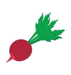 Radish flat icon vector image
