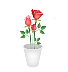 Red Roses in A Flower Pot vector image