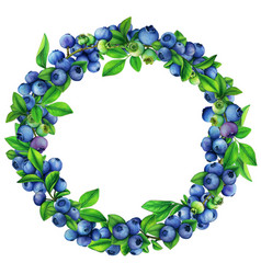 watercolor blueberry round wreath vector image