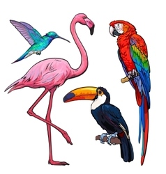 Colorful exotic tropical birds - flamingo macaw vector image