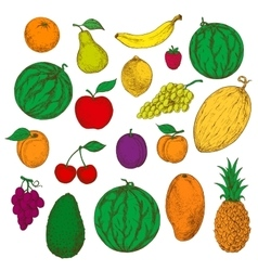 Enjoyable freshly harvested fruits berries icons vector image vector image