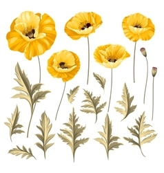 Set of poppy flowers elements vector