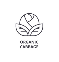 organic cabbage line icon outline sign linear vector image