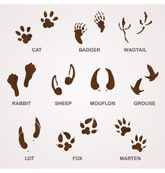 Wildlife Tracks vector image