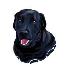 Black labrador retriever dog head vector