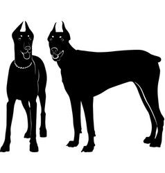 silhouette dog dobermann isolated vector image