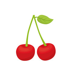 Cherries delicious fruit vector