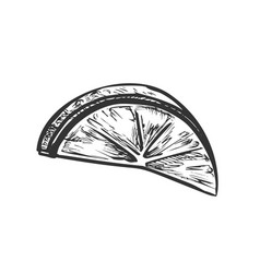 lime exotic citrus cut slice monochrome vector image