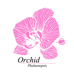 orchid flower sign logo phalaenopsis blossom vector image