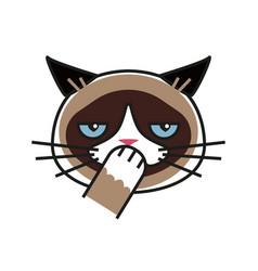 shy grumpy cat meme cat isolated white background vector image