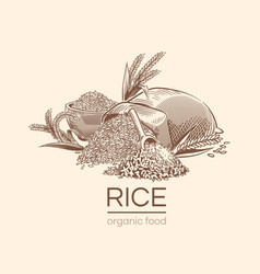 Sketch rice background agricultural plant vector