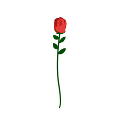 red rose isolated beautiful flower on white vector image
