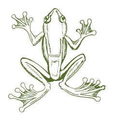tropical tree frog vector image