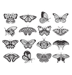 Butterfly silhouette set wildlife ornament of vector