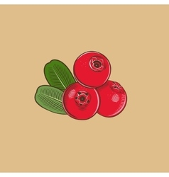 Cowberry in vintage style Colored vector