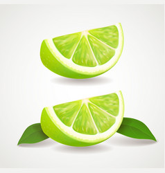 Slices of lime isolated icon realistic vector