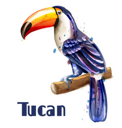 toucan isolated watercolor exotic summer vector image