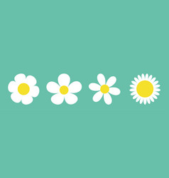 camomile set line four white daisy chamomile icon vector image