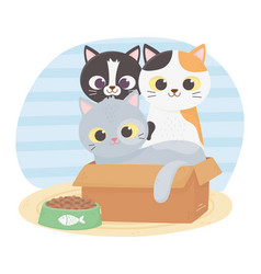 Cats make me happy various cats in cardboard box vector