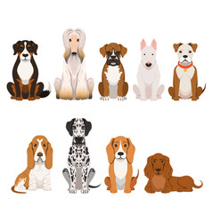 Different breeds dog group domestic animals vector