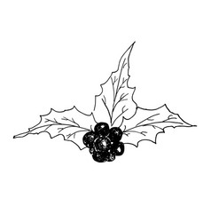 holly leaves and berries hand drawn icon outline vector image