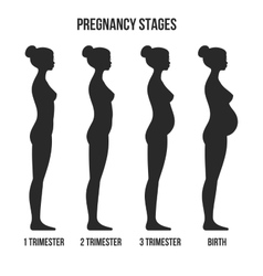 Pregnancy stages and birth infographics silhouette vector