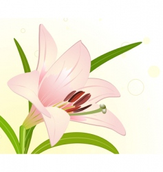 royal lily vector image