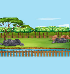 Scene with two gorillas in zoo vector