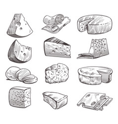 sketch cheese various types cheeses fresh vector image