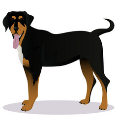transylvanian hound cartoon dog vector image