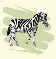beautiful zebra drawing vector image