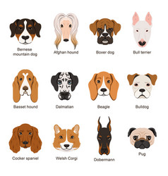 different dogs set isolate vector image vector image