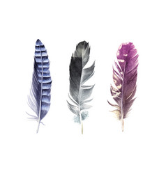 Hand drawn watercolor feather set vector