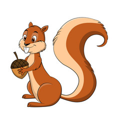 cartoon drawing of a squirrel vector image