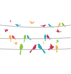 colorful birds sitting on wire isolated on white vector image