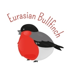 Eurasian cartoon bullfinch isolated on white vector image