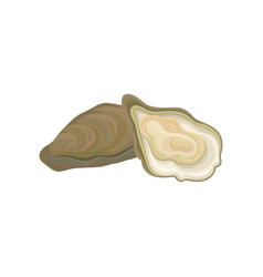 Fresh oysters raw mollusk in vector