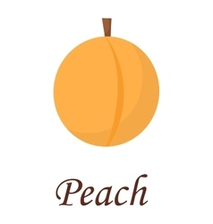 Peach isolated vector