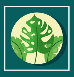 tropical leaves round banner monstera foliage vector image
