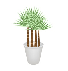 Palm Trees in A Flower Pot vector image vector image
