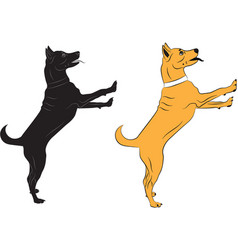 dog jumping asking someone something vector image