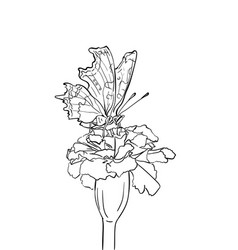 drawing butterfly on flower sketch hand drawn vector image