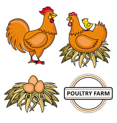 flat poutry farm chicken set vector image