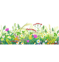 summer meadow plants seamless border vector image